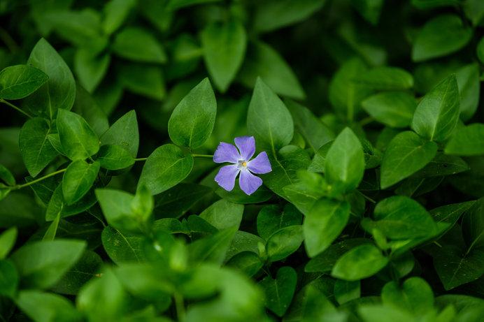 その昔は「青」だった!?春を象徴する色「緑」の由来とは