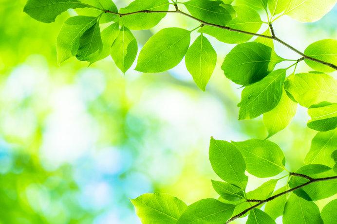 平安時代の代表的な緑色、「萌黄」