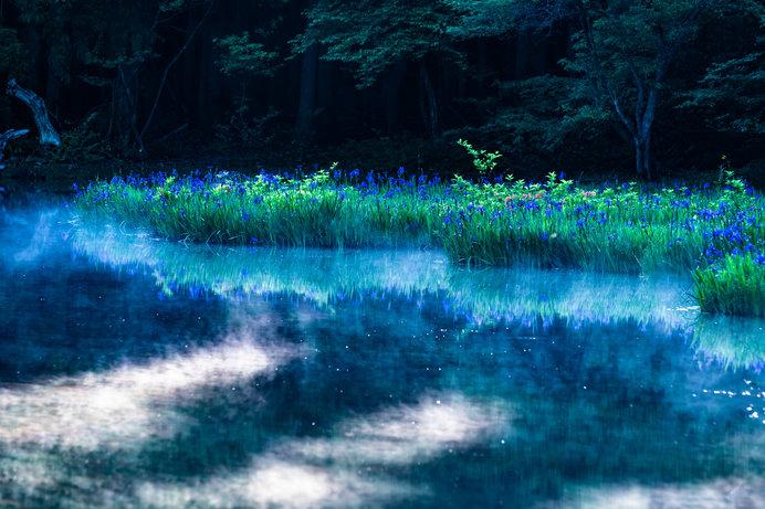 5月の水辺の風景