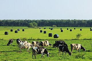 晴れた日をねらって牧草を収穫。北海道の牧場は大忙し