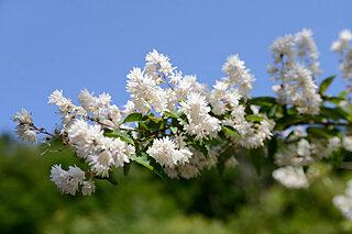 5月5日は「端午の節供」そして「立夏」!いよいよ季節は夏へと移ります