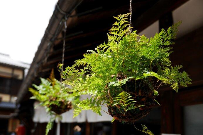 日本の夏の伝統インテリア・吊りしのぶ。河原左大臣の和歌はこちらと関連します