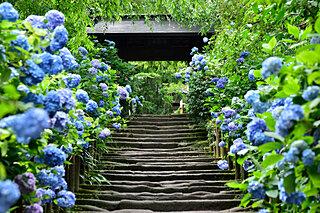 日本ならではの季節を表す「雑節」とは?今日は暦の上での「入梅」です