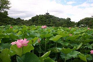 地元で夏を楽しむなら?〜横浜三渓園で花を愛でよう~