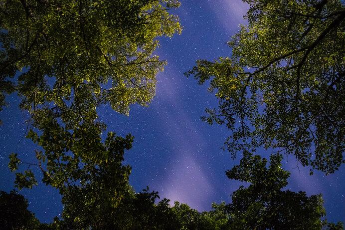 木々の間より見る星空