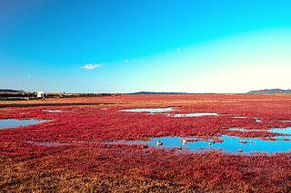 """ひと味違う""""紅葉""""。道東の湖を赤く染める「サンゴソウ」"""