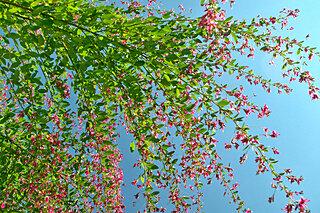 秋を代表する花といえば?~平安和歌に見られる萩~