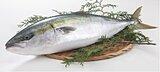 北海道でブリが豊漁! サケ・イカ・サンマにかわり秋の味覚に
