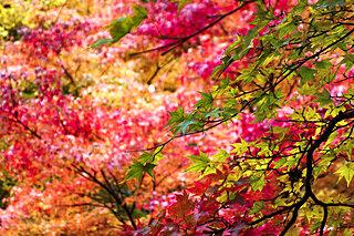 温泉の紅葉はお好きですか?ノスタルジーと日本美の絶景〜東日本編〜