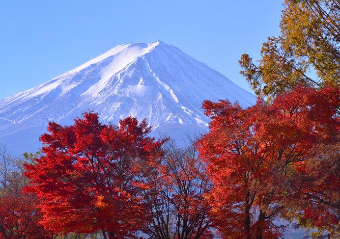ライトアップも美しい湖と富士の散歩道/河口湖畔 もみじ回廊(山梨県南都留郡)