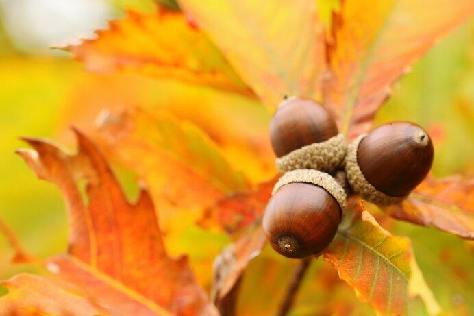 絵本から紅葉狩りに出かけよう♪あの頃に見た美しい秋をおぼえていますか?