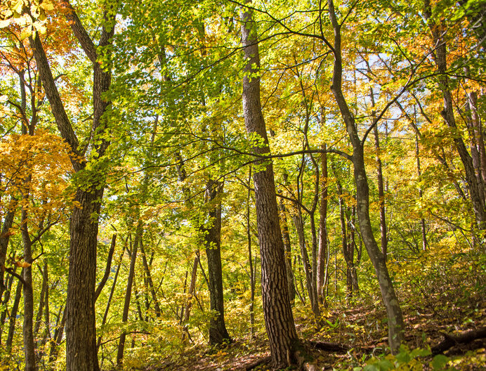 金色にけむった秋の森は不思議でせつない/もりのかくれんぼう(偕成社)