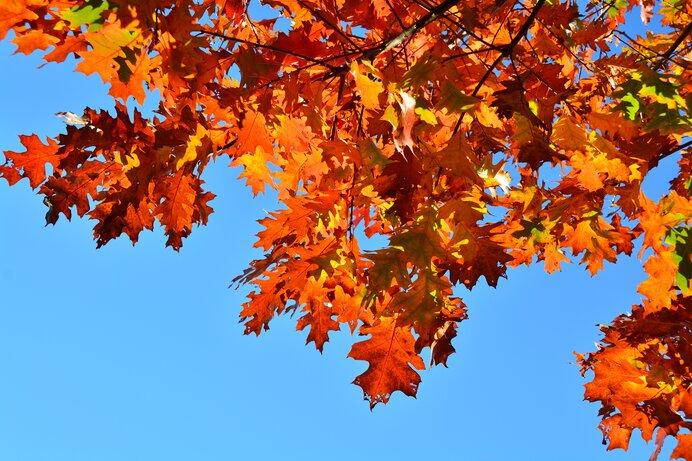 字のない絵本の中で自然は廻り美しい歌をうたう/木のうた(ほるぷ出版)