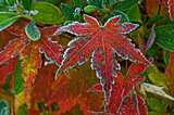 歳時記は「霜降(そうこう)」へ。秋の深まりに大きく関わる温度と湿度!