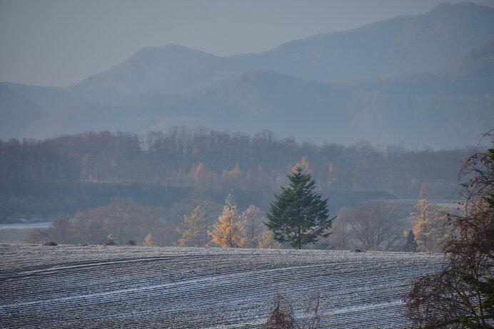 初候は「霜始降(しもはじめてふる)」霜は晩秋の一大イベント!