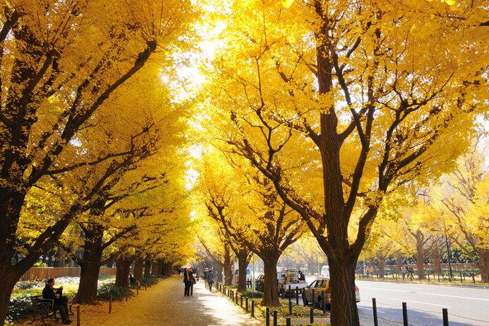 末候は「楓蔦黄(もみじつたきばむ)」いよいよ紅葉の季節です