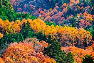 紅葉の錦に誘われる季節になりました~平安和歌に見られる紅葉~