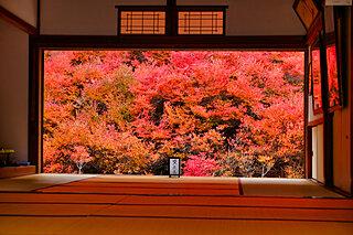 紅葉を愛でる日本人の心とは?身近な紅葉を楽しもう《その2》