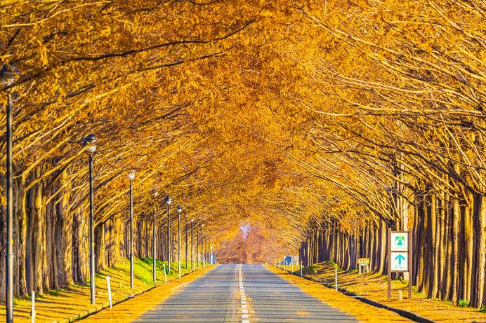 琵琶湖畔のメタセコイア並木。悠久の時間の流れを感じます