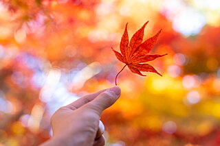 落ち葉を拾って楽しもう♪葉っぱの名前を知るには?おうちでの楽しみかたもご紹介!