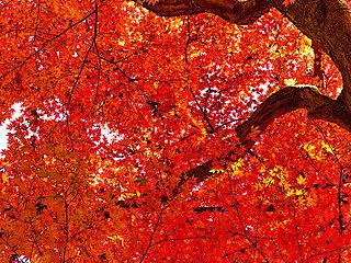 山で紅葉狩りを楽しもう♪初心者も気軽に登れる関東の山は?