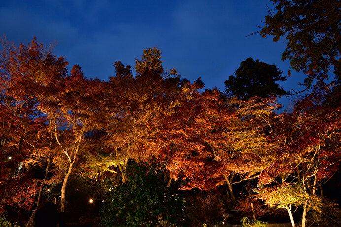 夜間運行でもみじのライトアップを楽しもう/筑波山(茨城県つくば市)