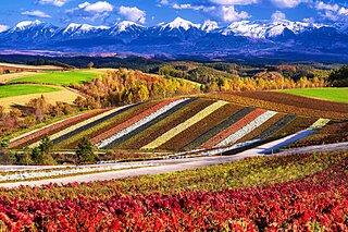 季節の彩りを楽しもう!身近に感じる季節の色<11月>