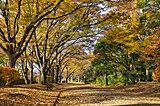 東京も紅葉シーズンに♪入場無料の公園に立ち寄ってみませんか?