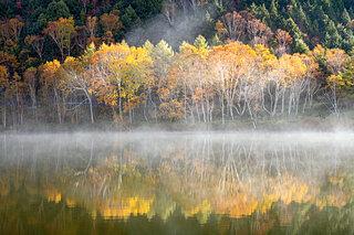 紅葉を隠す秋の霧~平安和歌に見られる霧~