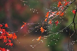 袖に降る時雨は涙~平安和歌に見られる時雨~
