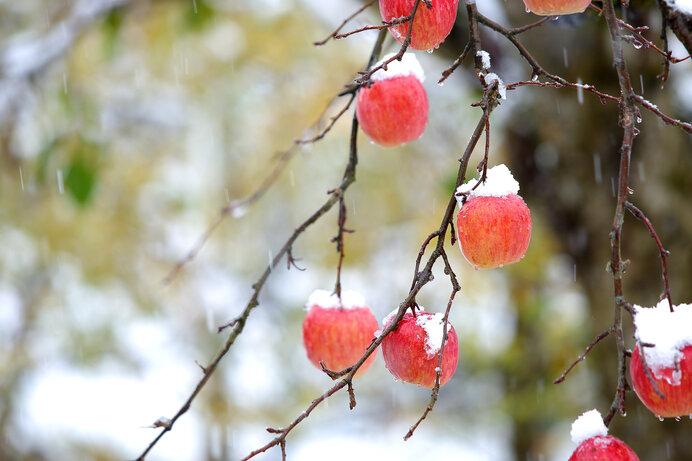 二十四節気は「大雪」に。 季節は冬へと舵を大きく切りました!
