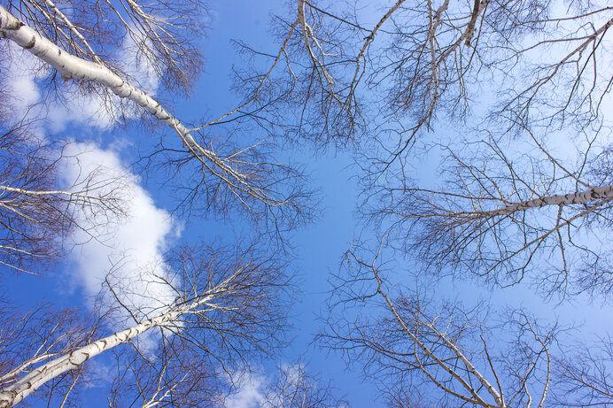 木々たちの越冬。葉を落として冬ざれの中で何を目指す?