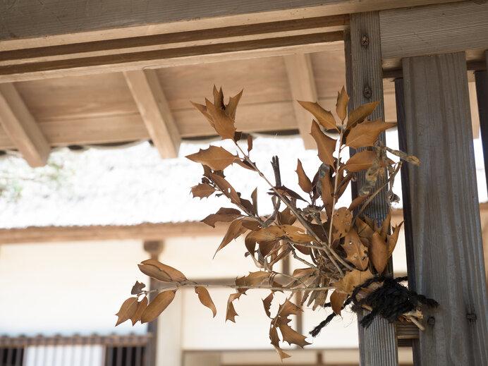 門口に飾られた魔除けのヒイラギ。事八日には多様な災厄除けの民間風習が見られます