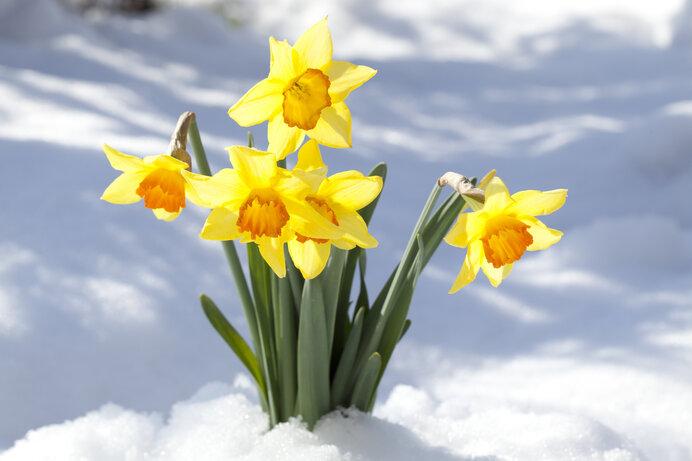 寒さの底は春への転換点。生命の胎動ははじまっています