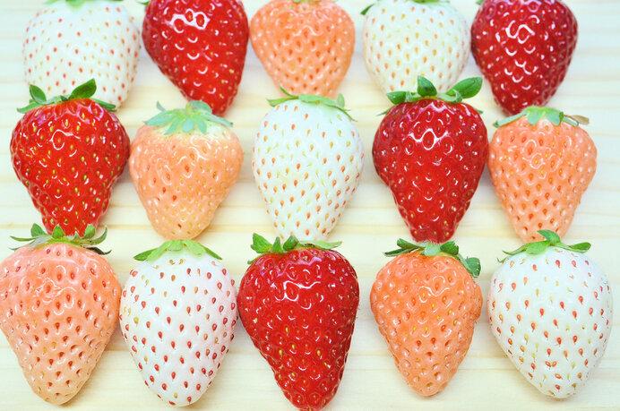 春を告げる果物、いちごが旬!5大品種とは?注目の「白いちご」のお味は?