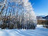 安心してスキーを楽しむための工夫をしているスキー場【甲信エリア編】