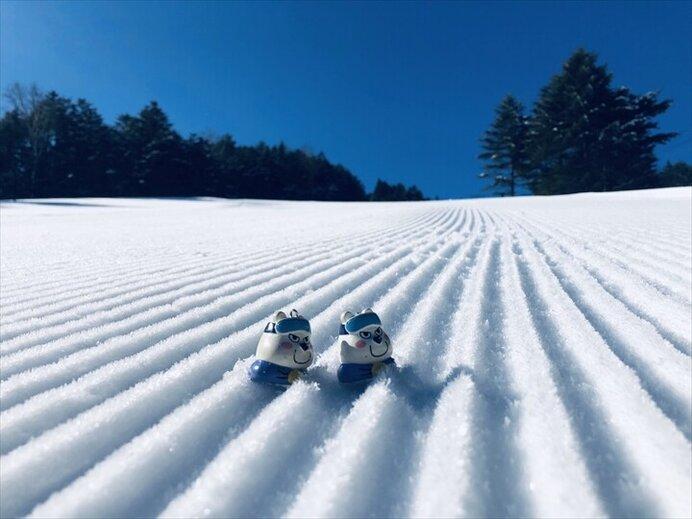 頂上から樹氷の間を滑るコースが人気/ブランシュたかやまスキーリゾート(長野県小県郡)