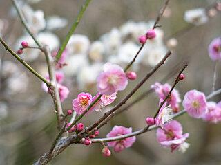 2月3日「立春」~大豆と立春の切っても切れない縁とは?