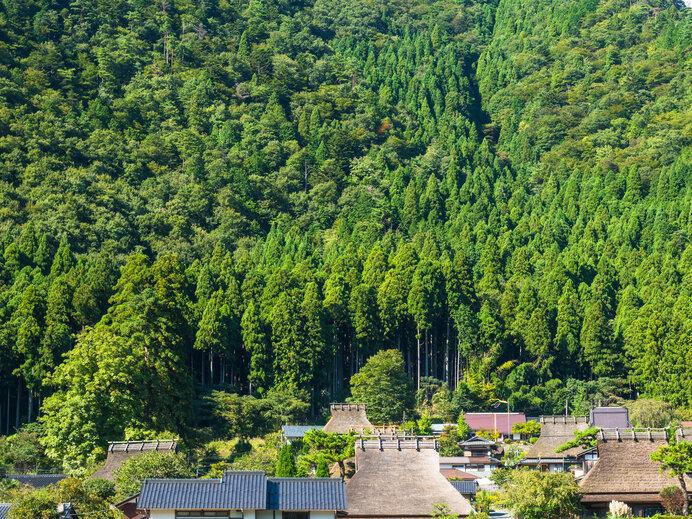 日本全国に植林だけで44億本のスギの木があります