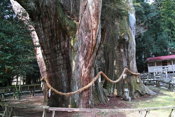 日本人は歴史の中で深くスギを崇めてきました