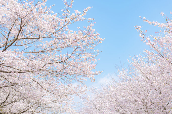 ドライブで楽しむ2021年の桜名所〜九州エリア編〜