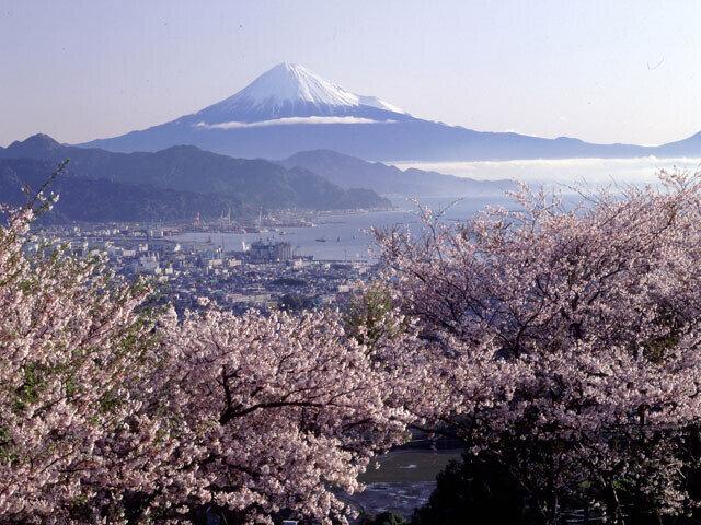 日本美の春!桜を眺めながら山頂まで絶景ドライブ/日本平(静岡県静岡市)