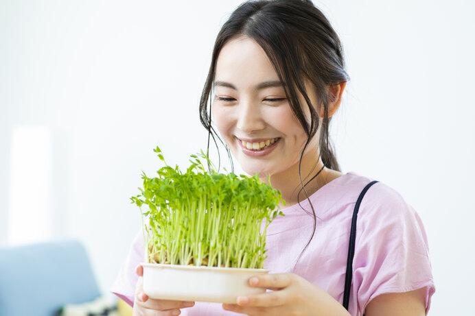 二度収穫を楽しめる、豆苗のリボベジ(再生栽培)。スクスク育つ姿にキュン♪