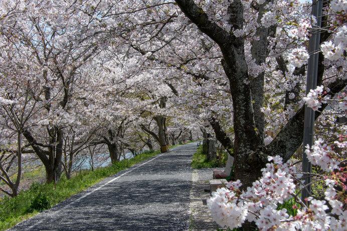 中国エリアの桜名所〜ドライブで楽しむ2021年の桜〜