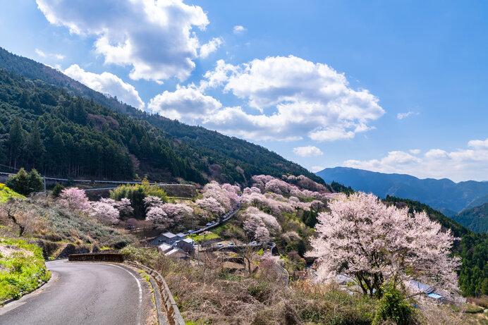 ドライブで楽しむ2021年の桜名所〜四国エリア編〜