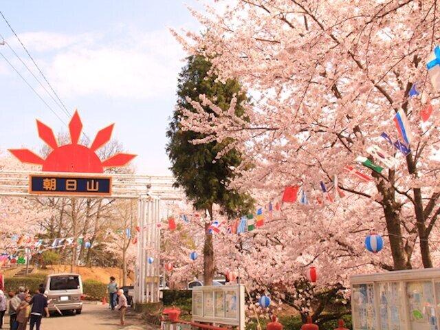 2000本が咲き競う!町の人々の手で造られた桜名所/朝日山森林公園の桜(香川県三豊市)