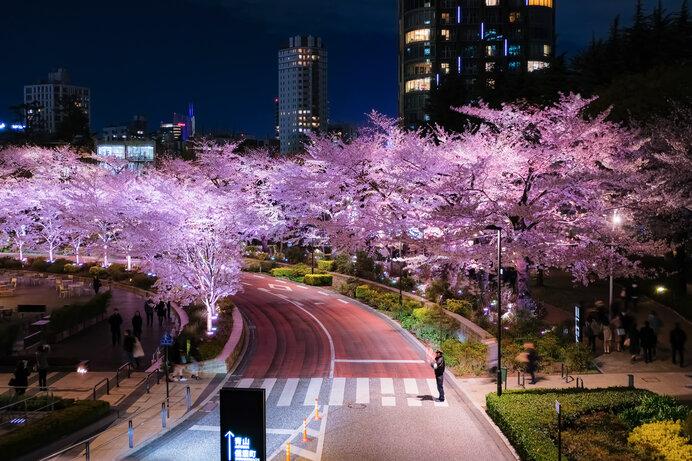 関東エリアの桜名所〜ドライブで楽しむ2021年の桜〜