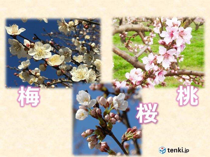 春を代表する梅・桃・桜