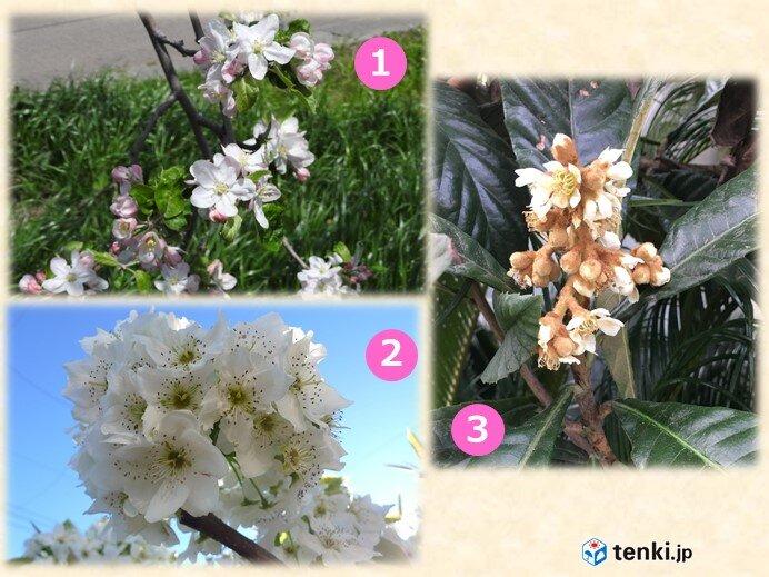 バラ科フルーツの花