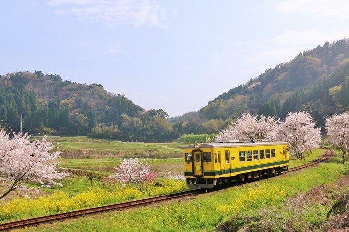 菜の花咲く中を走るローカル鉄道。ほのぼのした春の田園風景そのものです